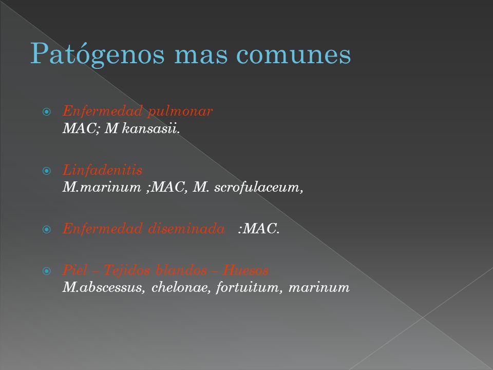 Patógenos mas comunes Enfermedad pulmonar MAC; M kansasii.