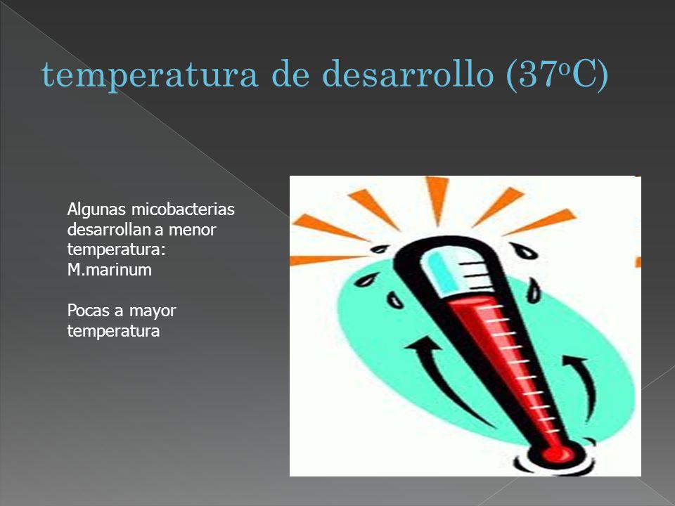 temperatura de desarrollo (37oC)