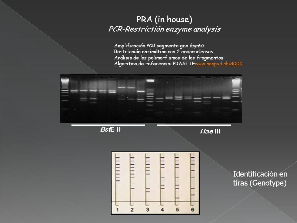 PCR-Restrictión enzyme analysis