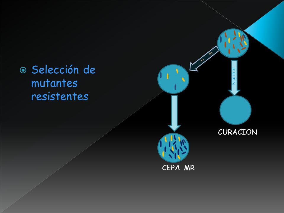 Selección de mutantes resistentes