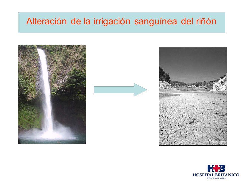 Alteración de la irrigación sanguínea del riñón
