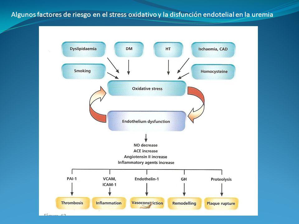 Algunos factores de riesgo en el stress oxidativo y la disfunción endotelial en la uremia