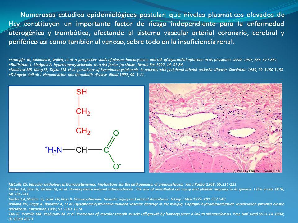Numerosos estudios epidemiológicos postulan que niveles plasmáticos elevados de Hcy constituyen un importante factor de riesgo independiente para la enfermedad aterogénica y trombótica, afectando al sistema vascular arterial coronario, cerebral y periférico así como también al venoso, sobre todo en la insuficiencia renal.