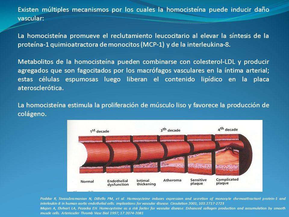 Existen múltiples mecanismos por los cuales la homocisteína puede inducir daño vascular: