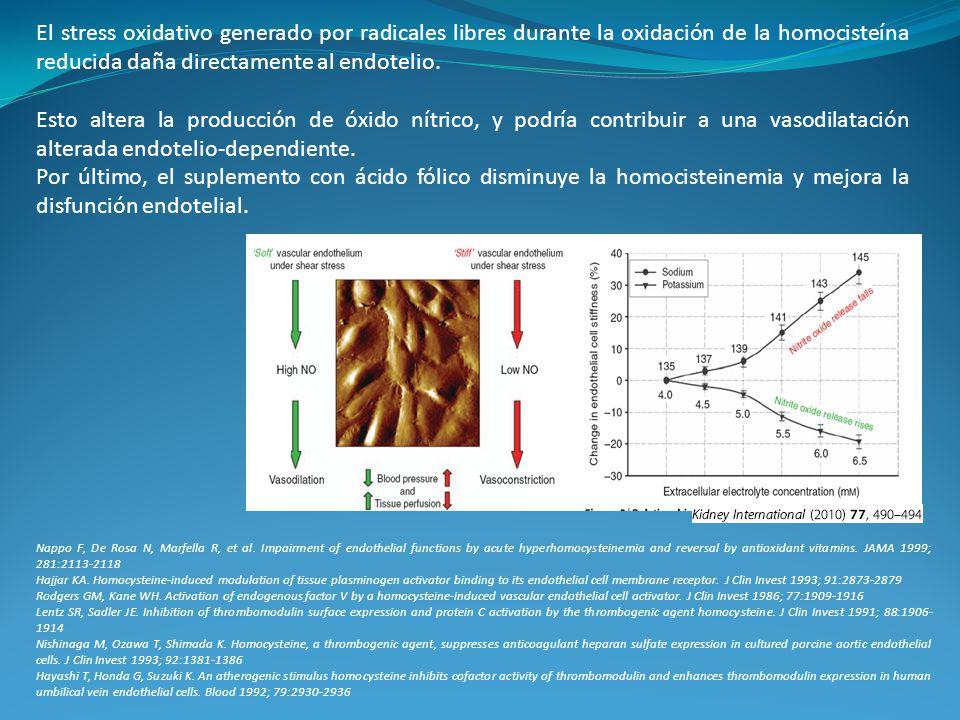 El stress oxidativo generado por radicales libres durante la oxidación de la homocisteína reducida daña directamente al endotelio.