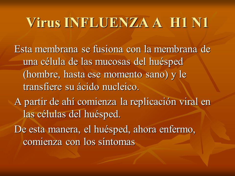 Virus INFLUENZA A H1 N1