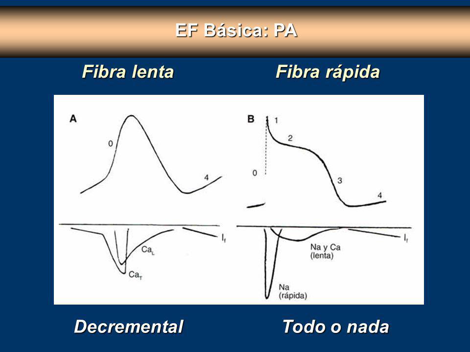 EF Básica: PA Fibra lenta Fibra rápida Decremental Todo o nada