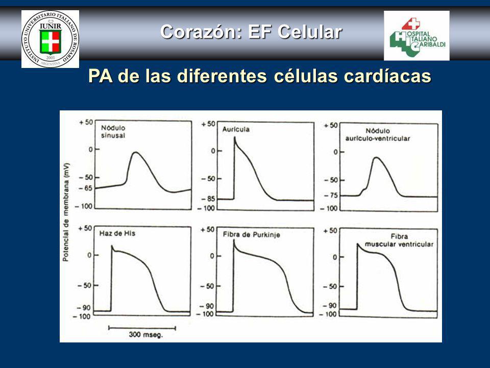 Corazón: EF Celular PA de las diferentes células cardíacas
