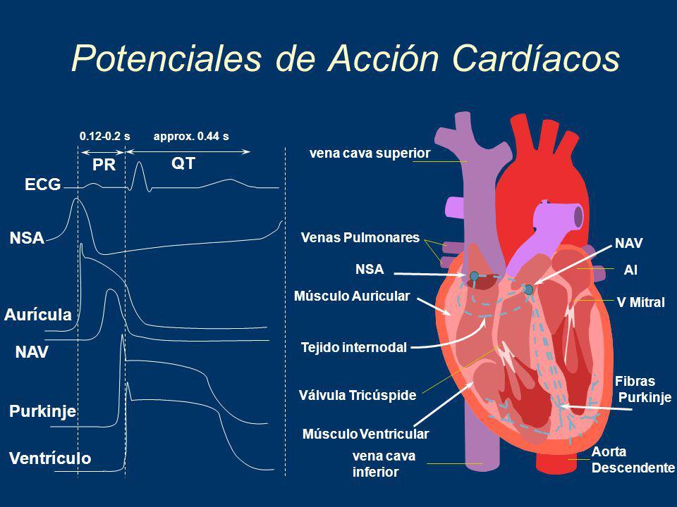 Potenciales de Acción Cardíacos