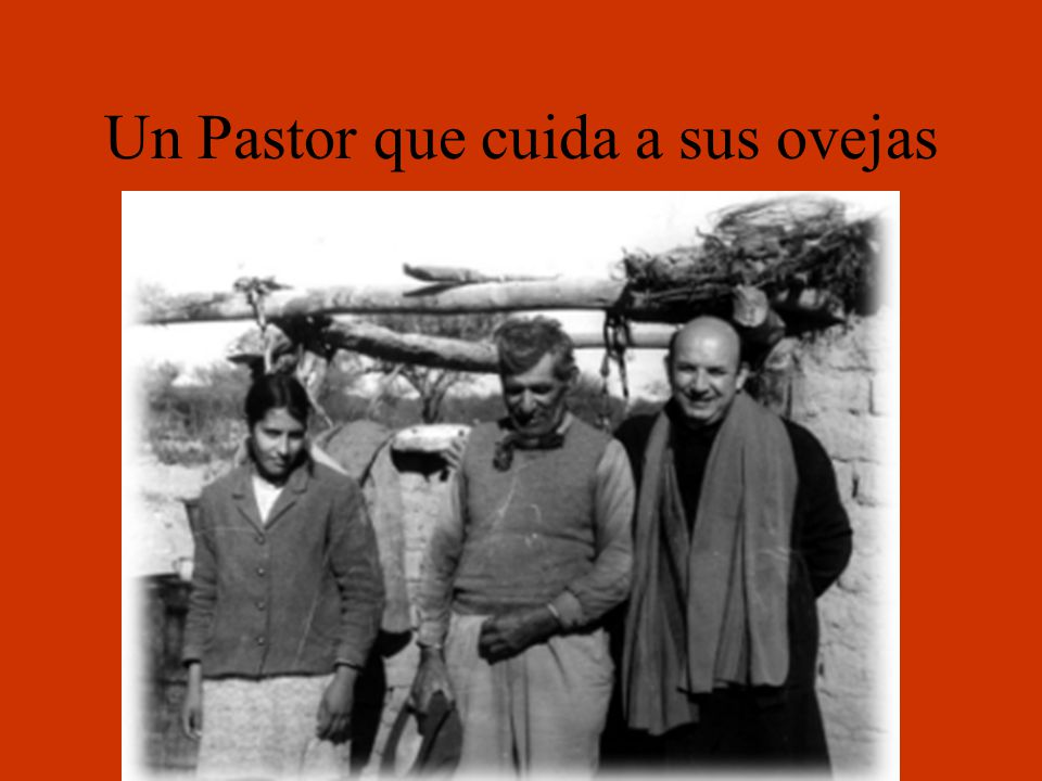 Un Pastor que cuida a sus ovejas