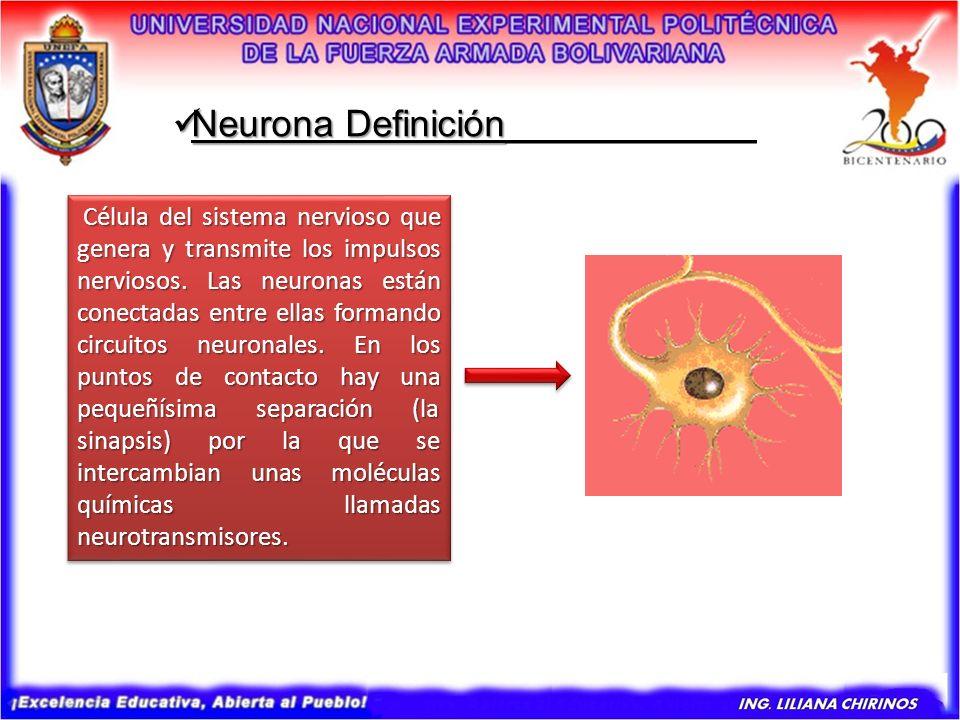 Neurona Definición____________