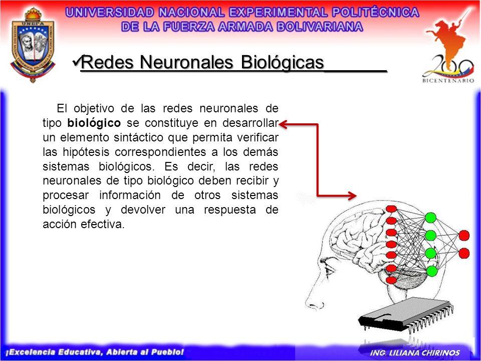 Redes Neuronales Biológicas______