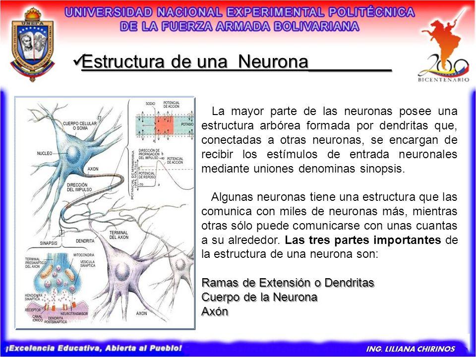 Estructura de una Neurona________