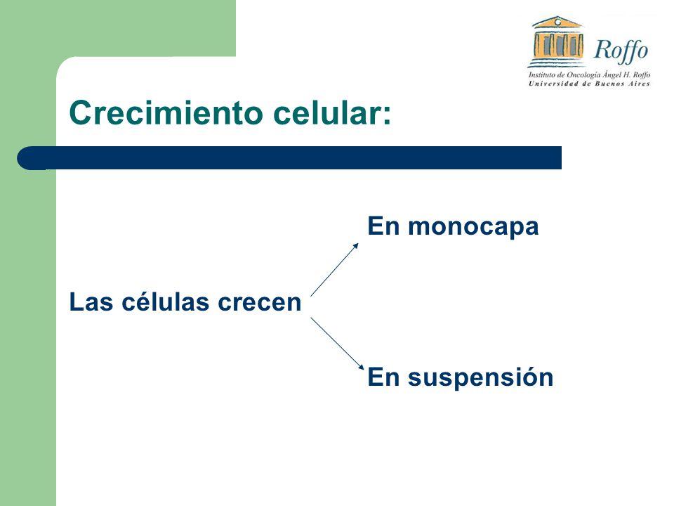 Crecimiento celular: En monocapa Las células crecen En suspensión