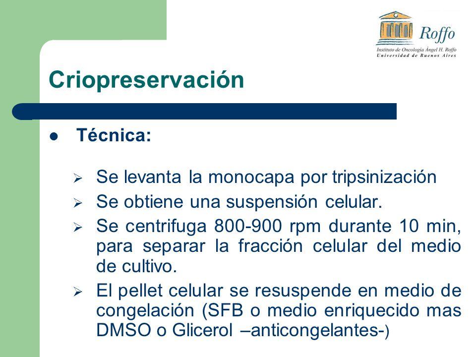 Criopreservación Técnica: Se levanta la monocapa por tripsinización