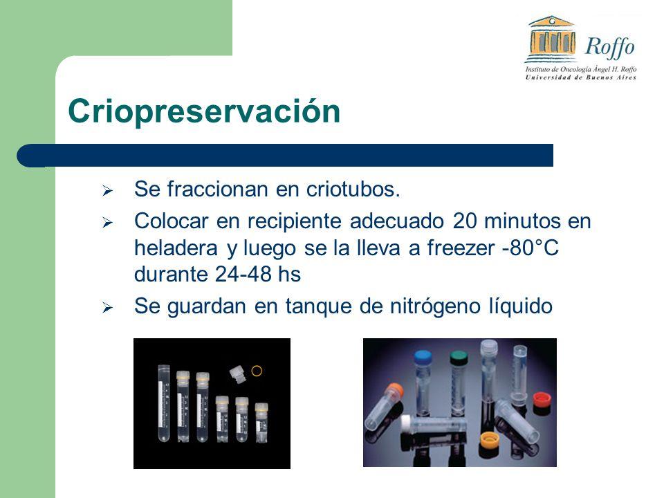 Criopreservación Se fraccionan en criotubos.