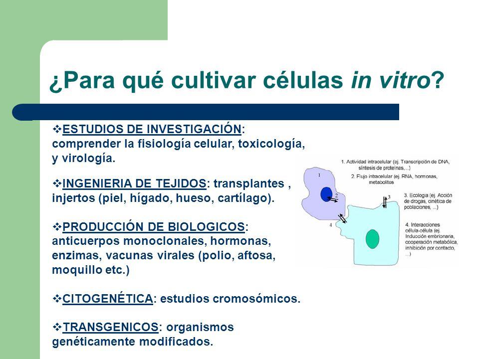 ¿Para qué cultivar células in vitro