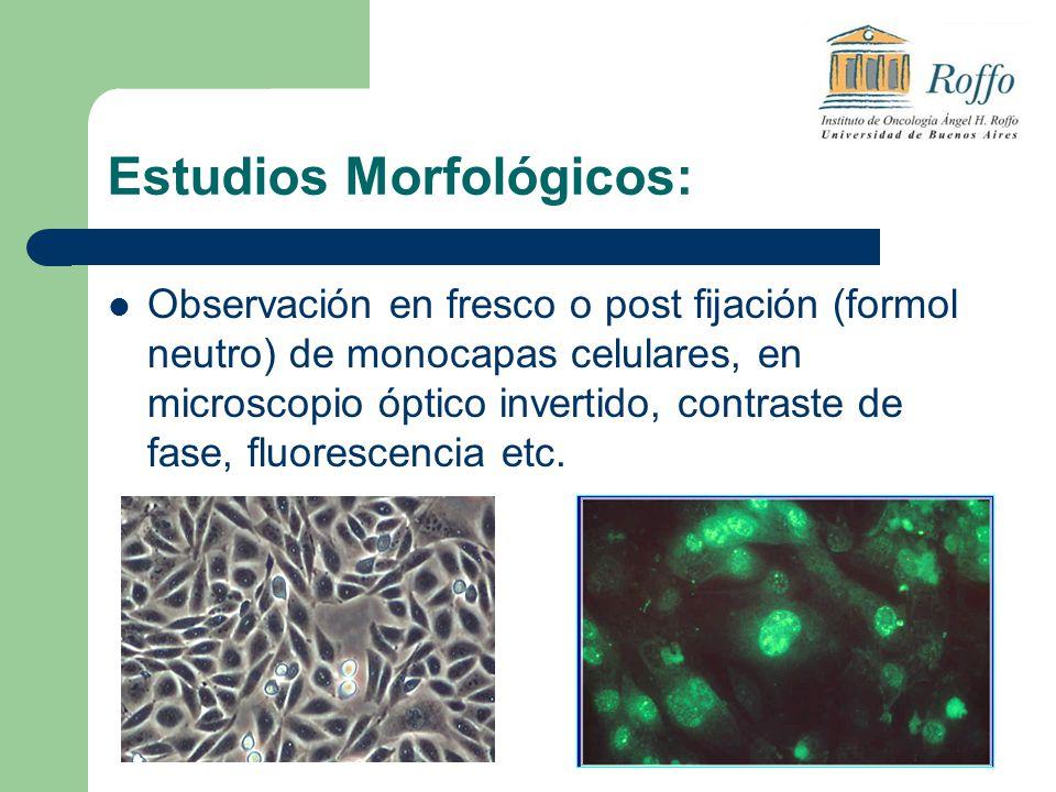 Estudios Morfológicos: