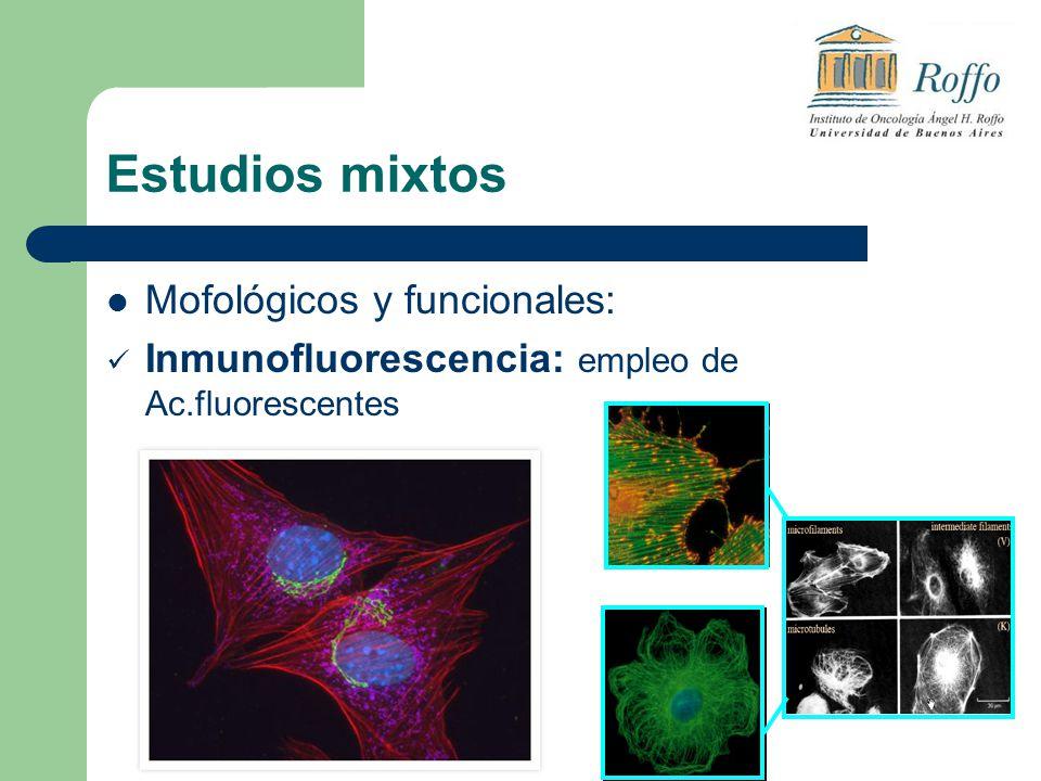Estudios mixtos Mofológicos y funcionales: