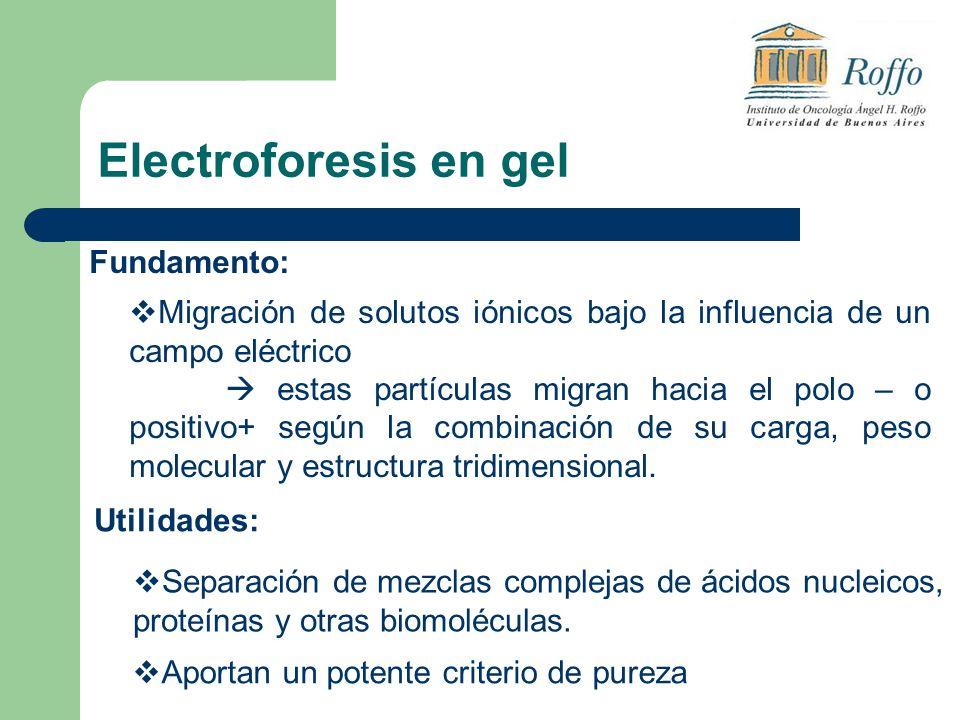 Electroforesis en gel Fundamento: