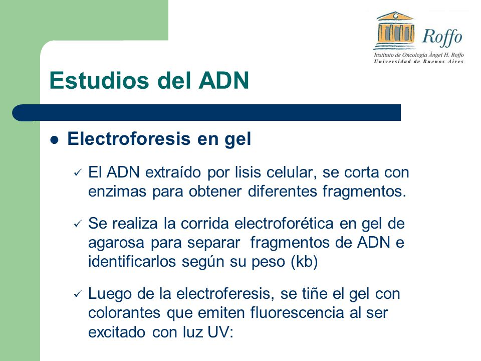 Estudios del ADN Electroforesis en gel