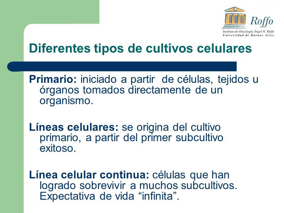 Diferentes tipos de cultivos celulares