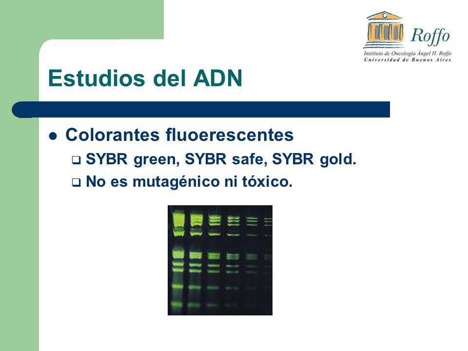 Estudios del ADN Colorantes fluoerescentes