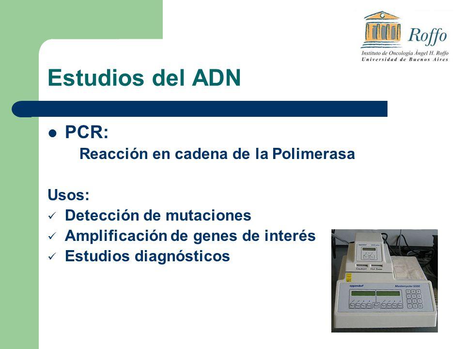Estudios del ADN PCR: Usos: Detección de mutaciones
