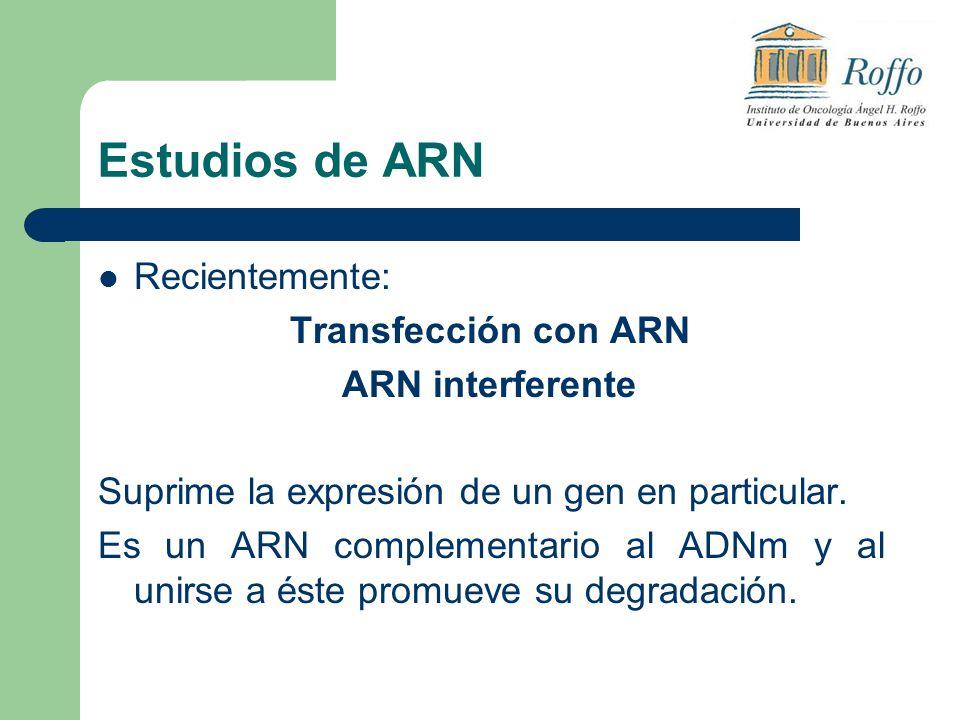 Estudios de ARN Recientemente: Transfección con ARN ARN interferente