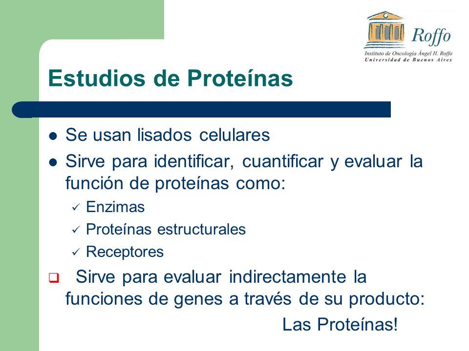 Estudios de Proteínas Se usan lisados celulares