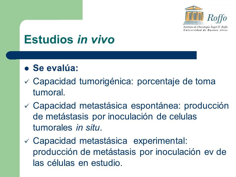 Estudios in vivo Se evalúa: