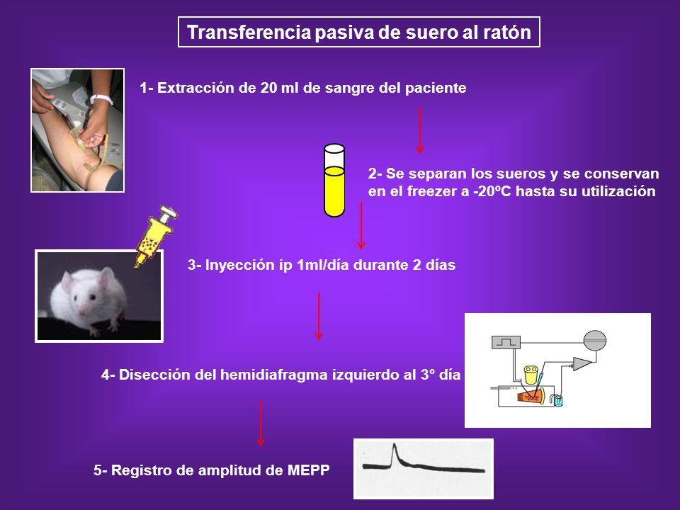 Transferencia pasiva de suero al ratón 5- Registro de amplitud de MEPP