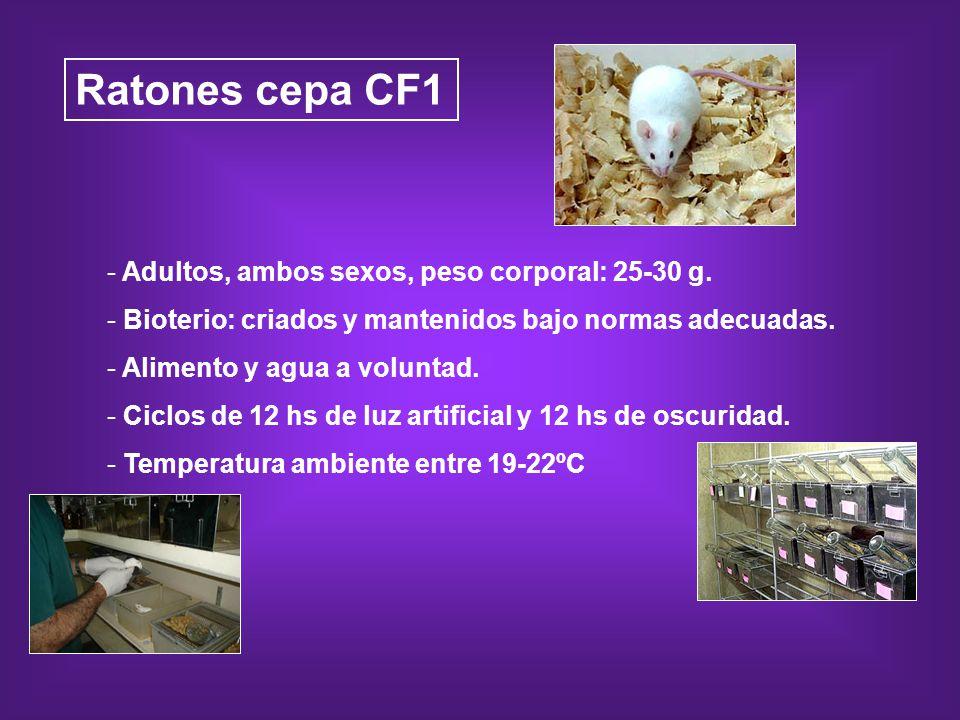 Ratones cepa CF1 Adultos, ambos sexos, peso corporal: 25-30 g.