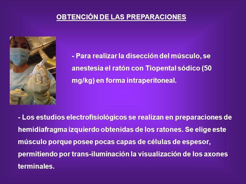 OBTENCIÓN DE LAS PREPARACIONES