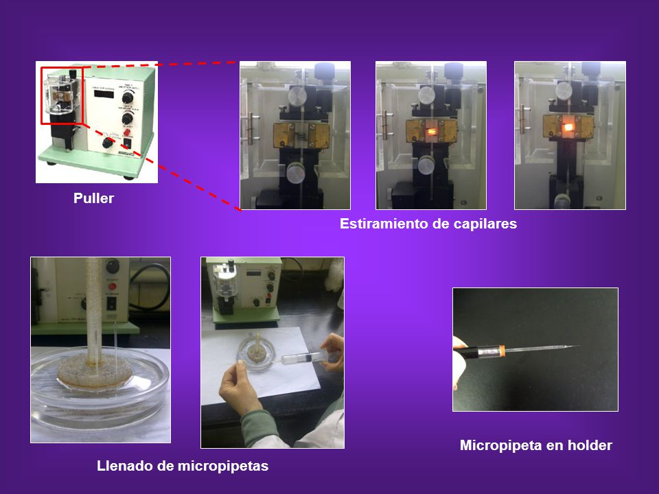 Puller Estiramiento de capilares Micropipeta en holder Llenado de micropipetas