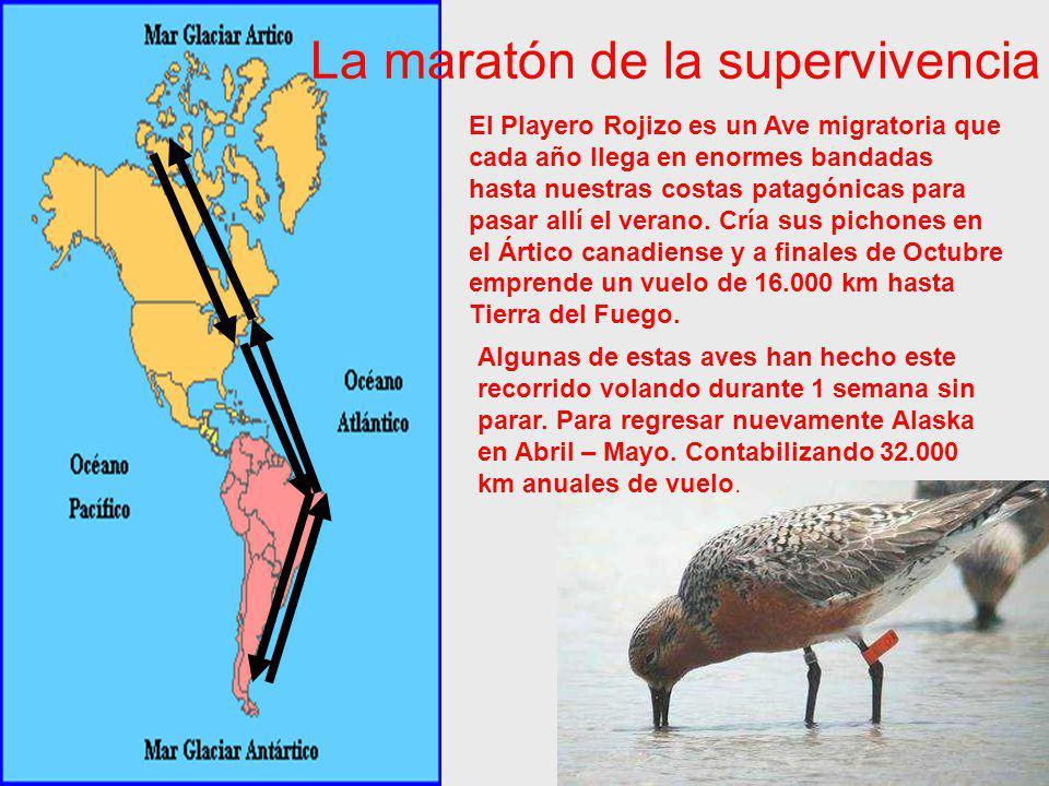 La maratón de la supervivencia
