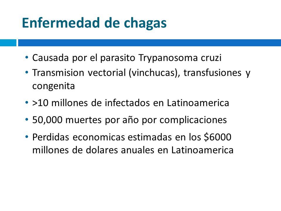 Enfermedad de chagas Causada por el parasito Trypanosoma cruzi