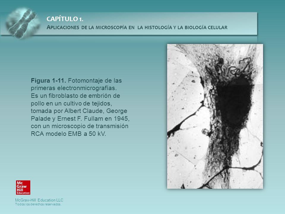 Figura 1-11. Fotomontaje de las primeras electronmicrografías.