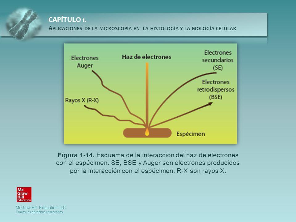 Figura 1-14. Esquema de la interacción del haz de electrones con el espécimen.