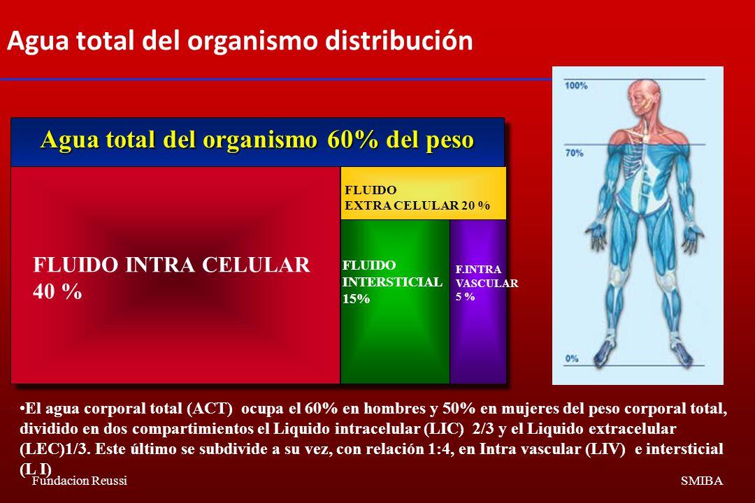 Agua total del organismo distribución