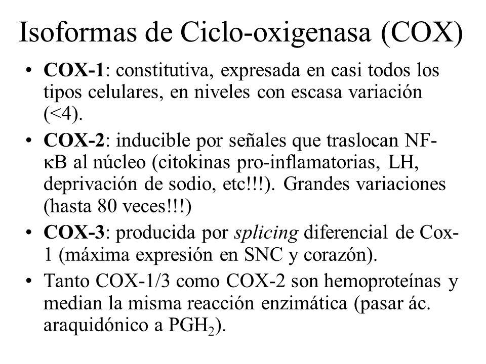 Isoformas de Ciclo-oxigenasa (COX)