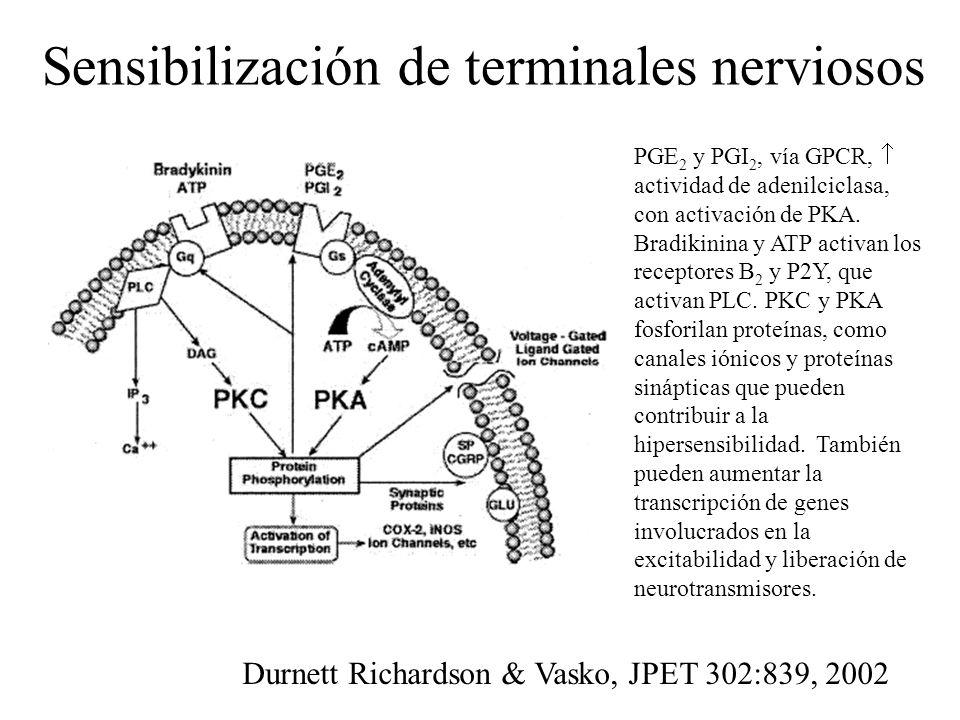 Sensibilización de terminales nerviosos