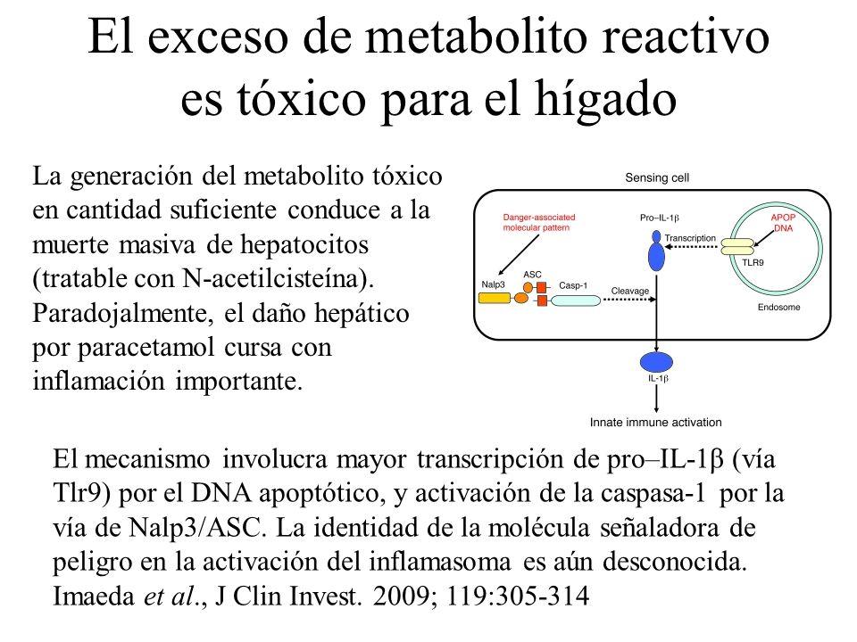 El exceso de metabolito reactivo es tóxico para el hígado