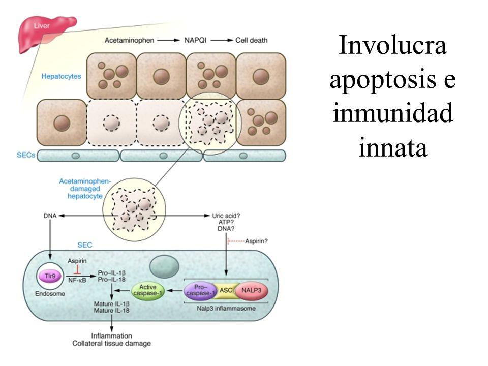 Involucra apoptosis e inmunidad innata