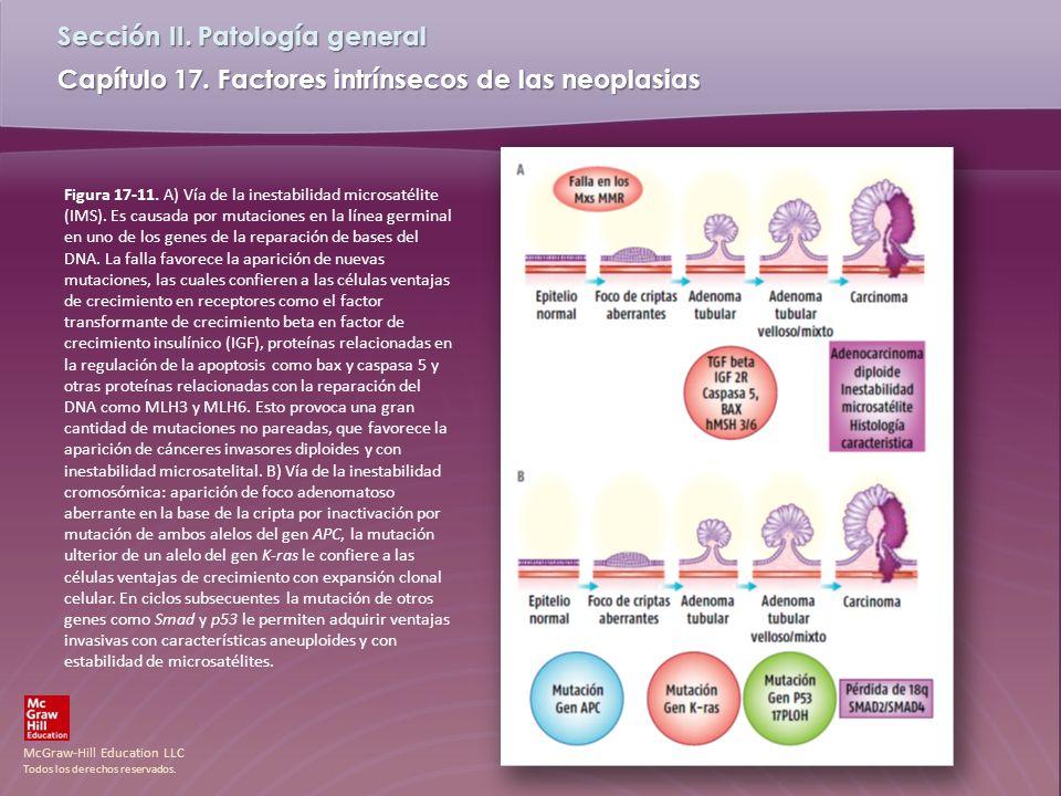 Figura 17-11. A) Vía de la inestabilidad microsatélite (IMS)