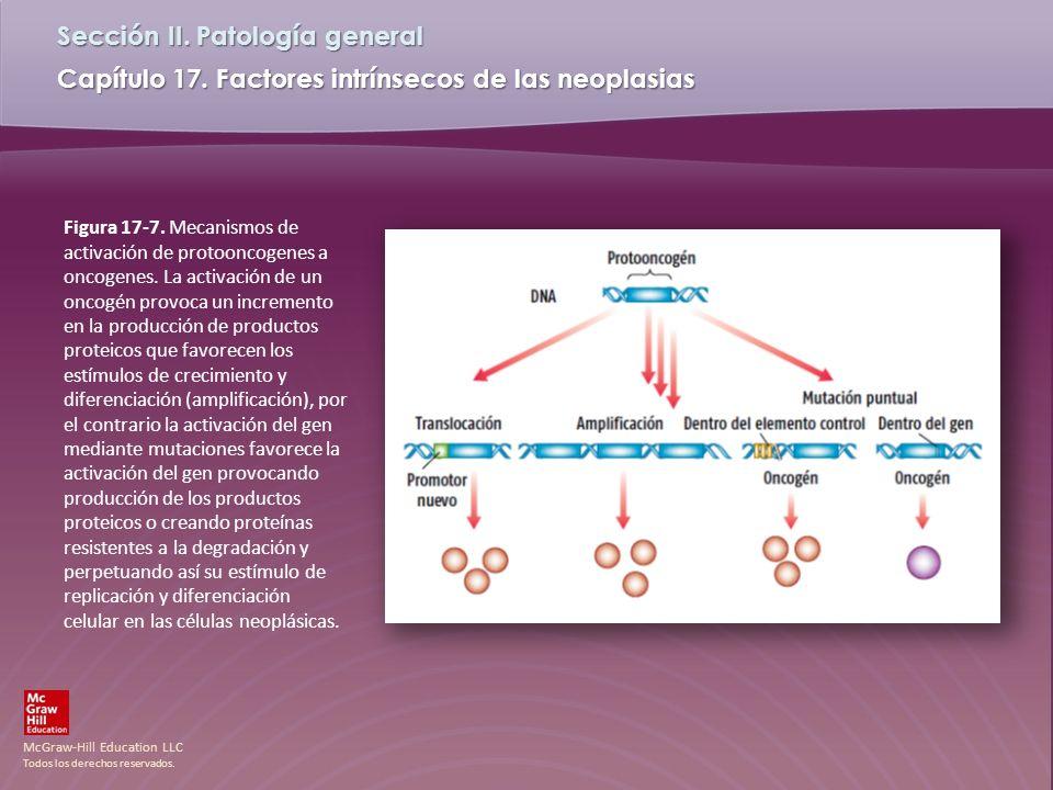 Figura 17-7. Mecanismos de activación de protooncogenes a oncogenes