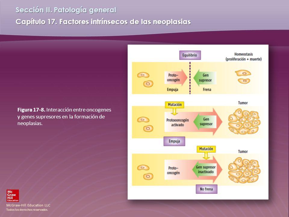Figura 17-8. Interacción entre oncogenes y genes supresores en la formación de neoplasias.