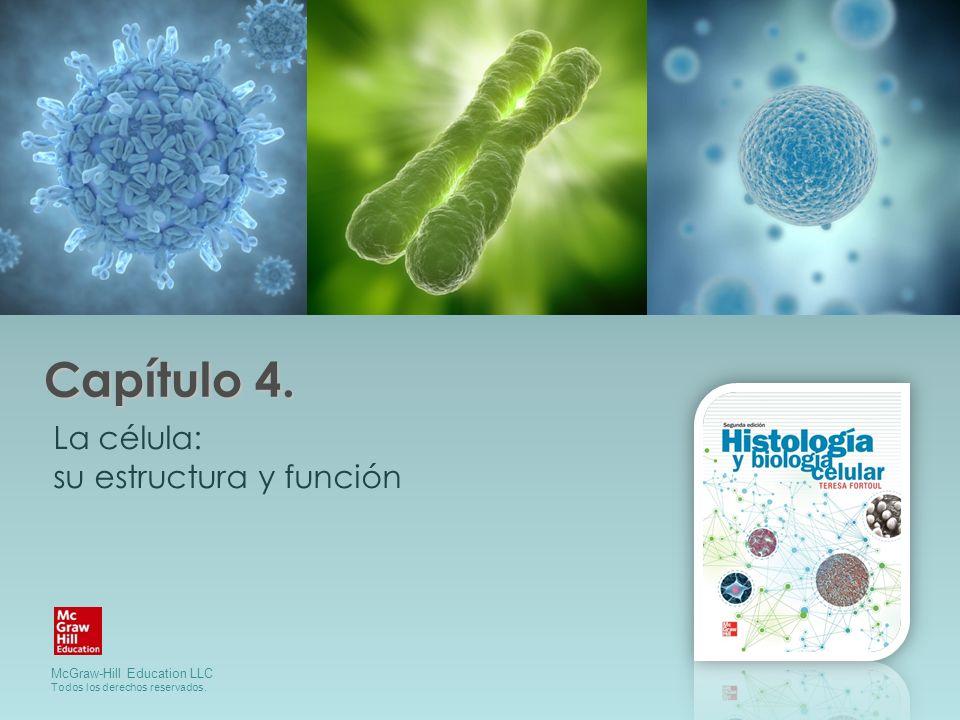 Capítulo 4. La célula: su estructura y función