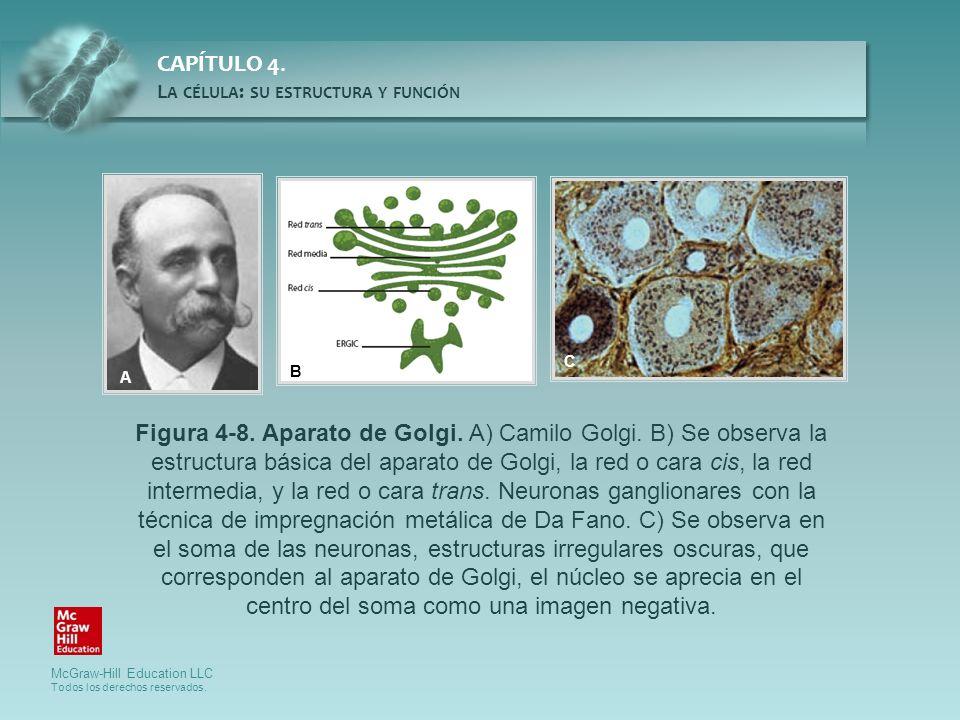 Figura 4-8. Aparato de Golgi. A) Camilo Golgi. B) Se observa la