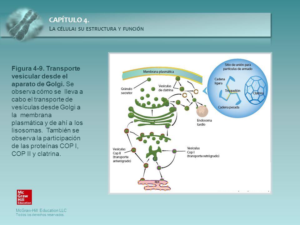 Figura 4-9. Transporte vesicular desde el aparato de Golgi